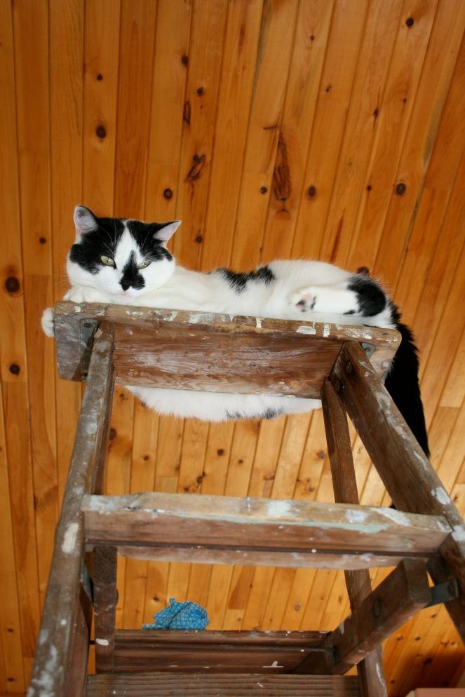 Minnie on Ladder