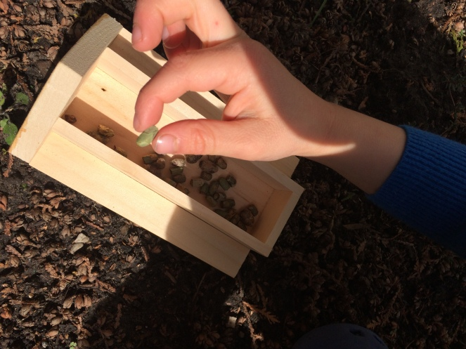 How to raise Mason bee and Leafcutter bees